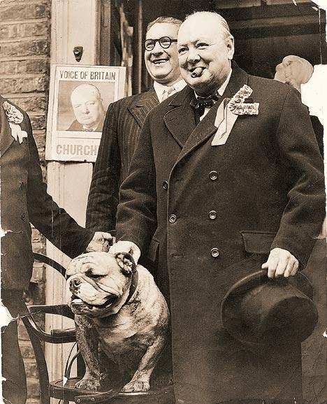 churchill bulldog