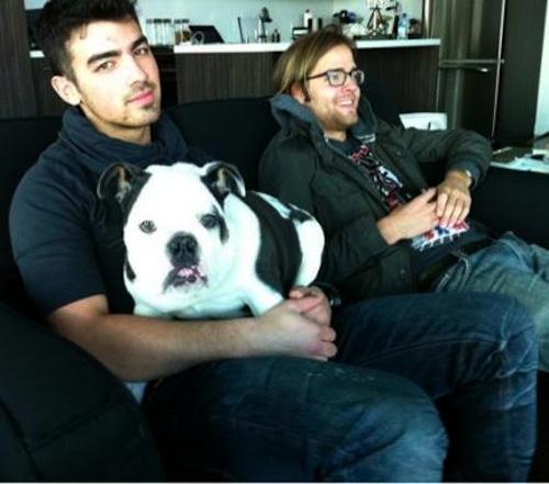 joe-jonas-winston-blue-bulldog