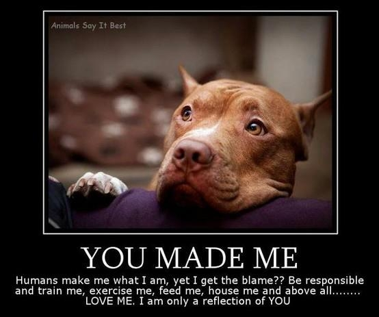 pitbulls are not born aggresive essay Are pit bulls more aggressive than other dogs by eric stirgus on wednesday, august 3rd,  pit bulls are not the problem, they argue, people are.