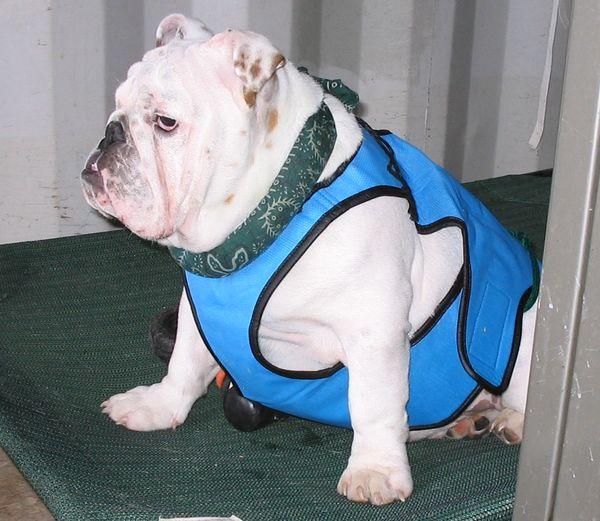 Bulldog Health Baggybulldogs