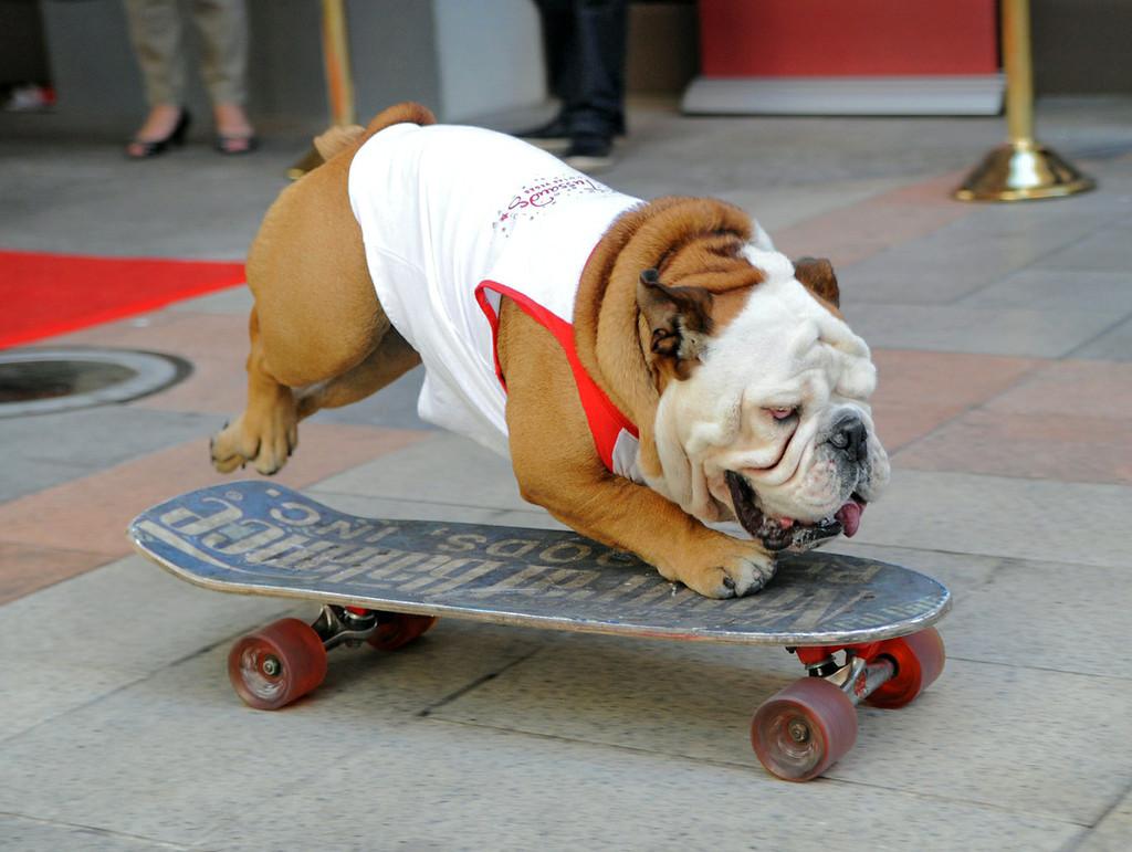 Skateboarding Bulldogs Baggy Bulldogs