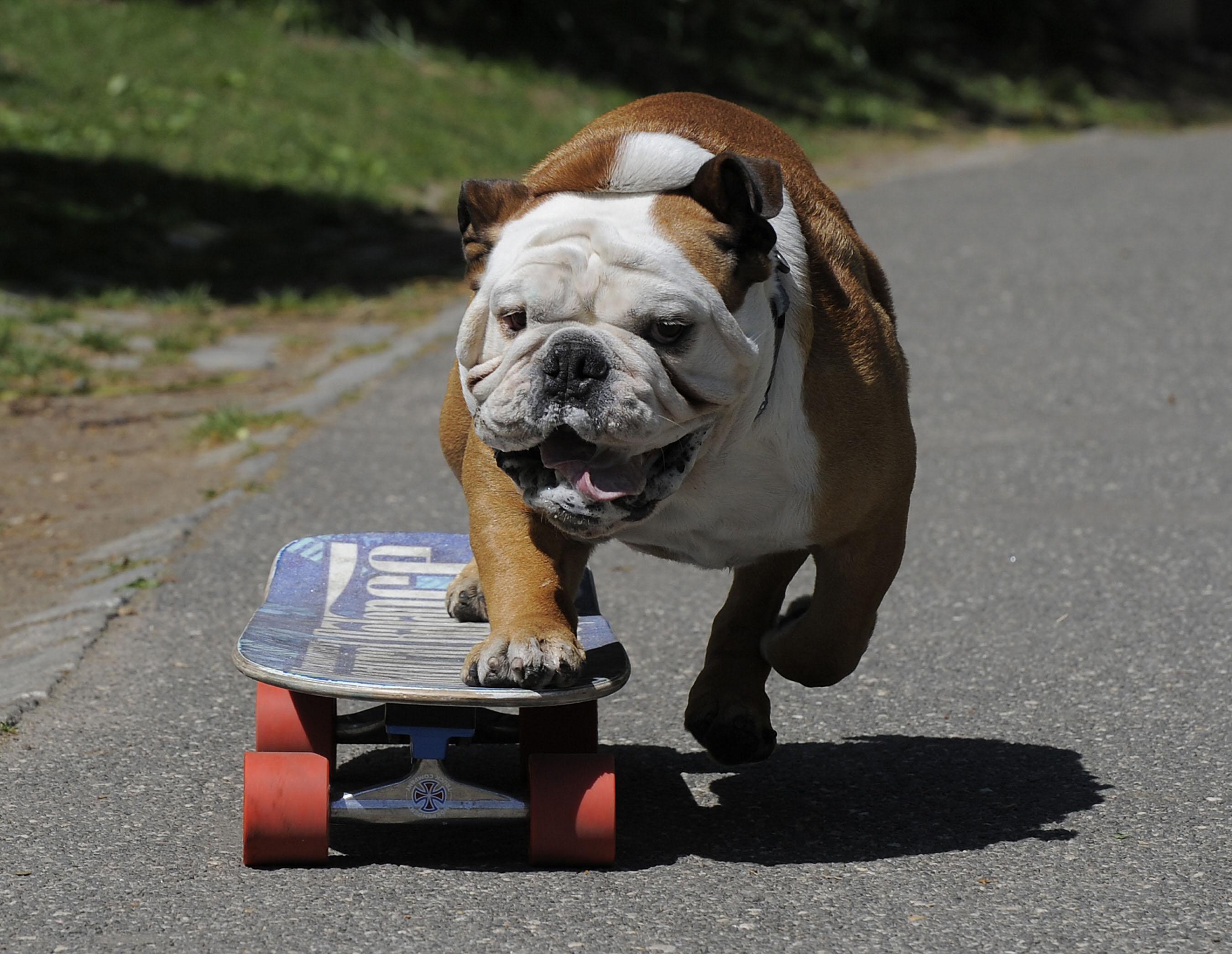 Skateboard Dog Collar