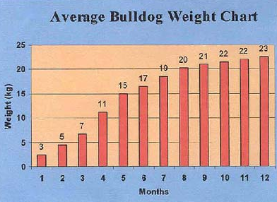 How much should a french bulldog weigh at 12 weeks