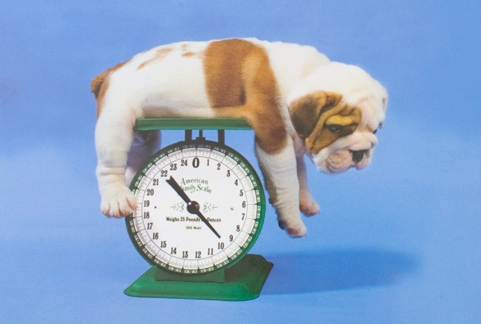 Bulldog weight chart baggy bulldogs bulldogs weight ccuart Image collections