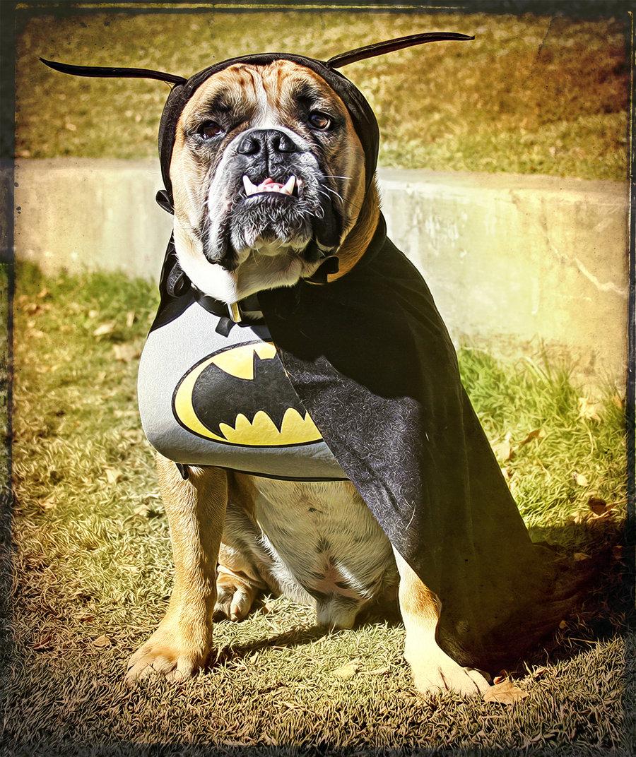 super heroes baggybulldogs