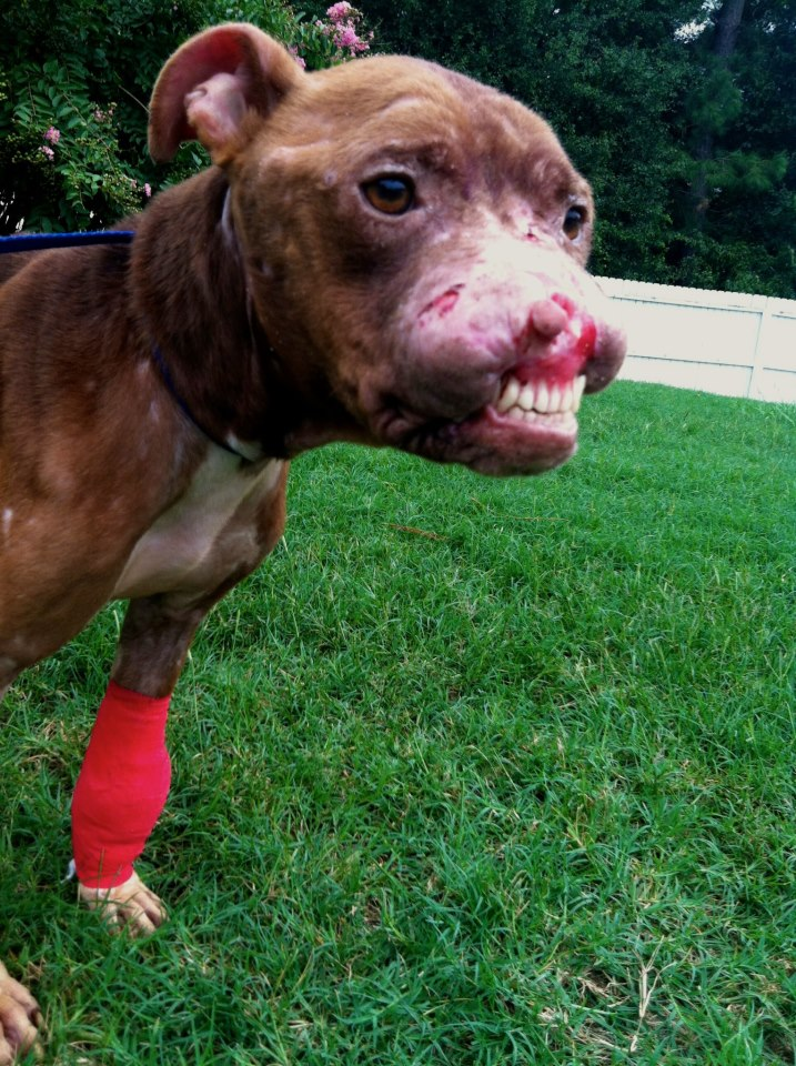 you can help 2 stop dogfighting baggybulldogs