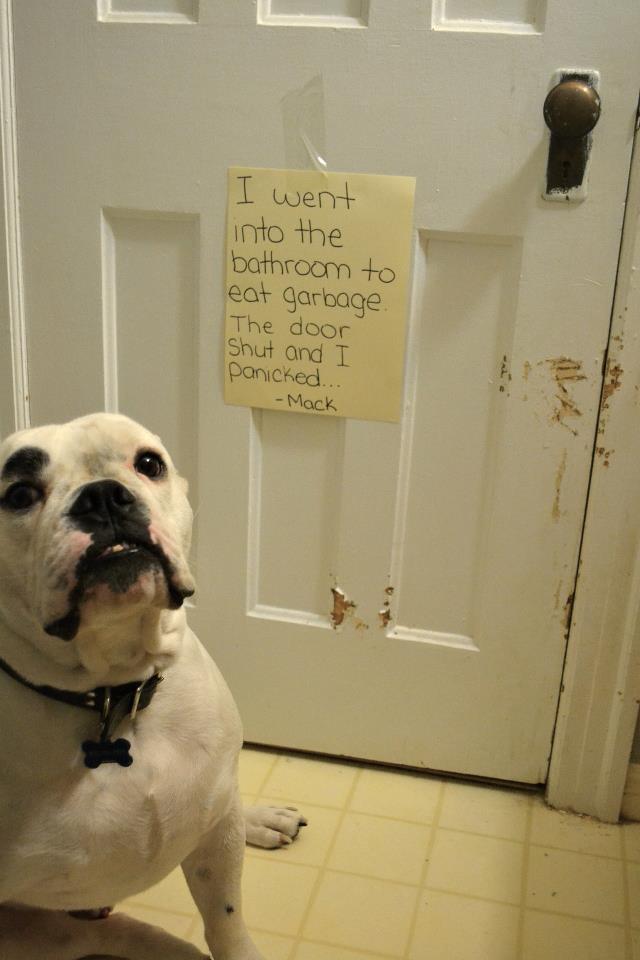 Dog Shame Baggybulldogs