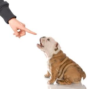 buying pet