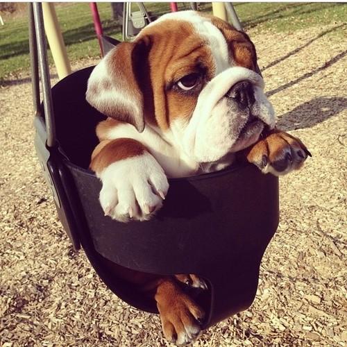 Swing Away Baggy Bulldogs