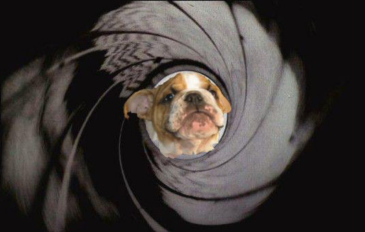 The Meaning Of Ms Bulldog James Bond Skyfall Baggy Bulldogs