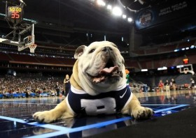 HOUSTON, TX - APRIL 01: Butler Bulldogs mascot Blue II on the court as Butler practices prior to the 2011 Final Four of the NCAA Division I Men's Basketball Tournament at Reliant Stadium on April 1, 2011 in Houston, Texas. (Photo by Streeter Lecka/Getty Images)