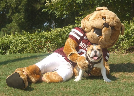 Bully the mascot of Mississippi State University 1