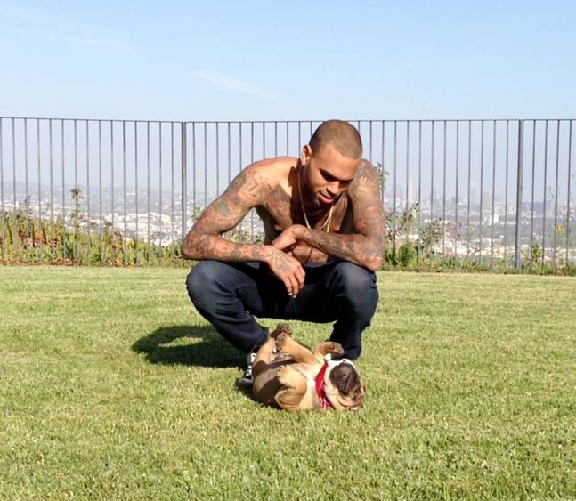 Chris Brown (1)