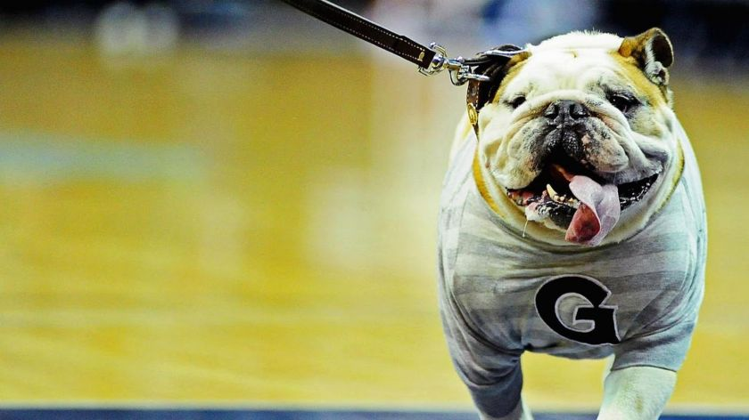 Jack the Bulldog Georgetown University 3