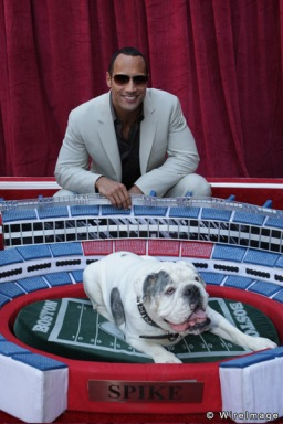 "Dwayne ""The Rock"" Johnson and Spike the Bulldog at the World Premiere of Walt Disney Pictures' ""The Game Plan"" at the El Capitan Theatre on September 23, 2007 in Hollywood, California. World Premiere of Walt Disney Pictures ""The Game Plan"" El Capitan Theatre Los Angeles, California United States September 23, 2007 Photo by Eric Charbonneau/WireImage.com To license this image (14858719), contact WireImage: U.S. +1-212-686-8900 / U.K. +44-207-868-8940 / Australia +61-2-8262-9222 / Germany +49-40-320-05521 / Japan: +81-3-5464-7020 +1 212-686-8901 (fax) info@wireimage.com (e-mail) www.wireimage.com (web site)"