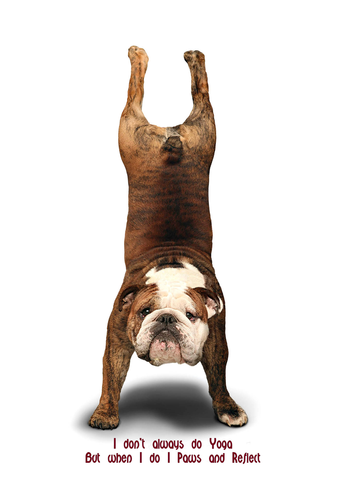 Bulldog Quotes Bulldog Yoga  Baggybulldogs