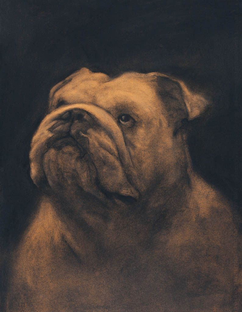 Buy Pictures art Bulldog pictures trends