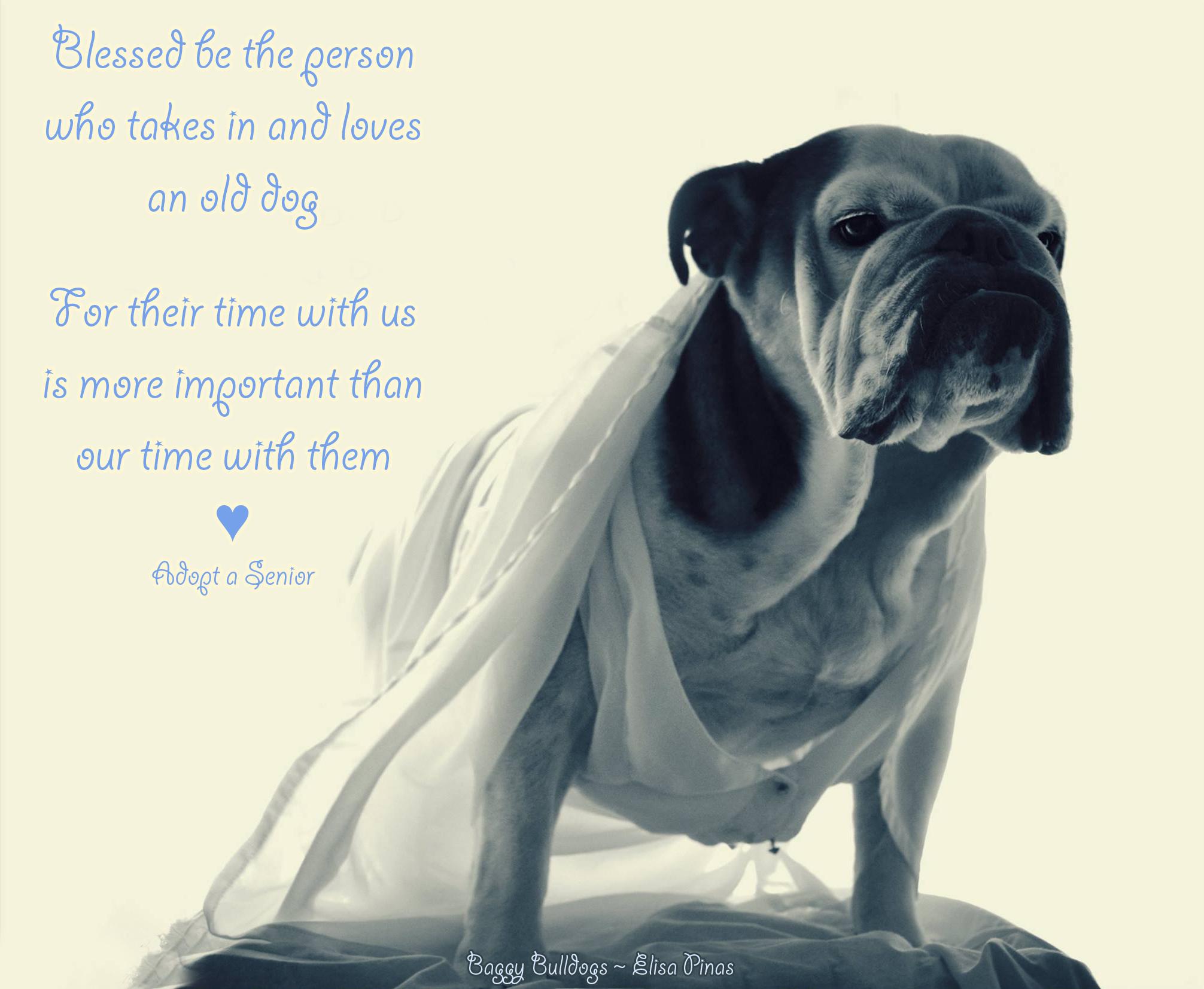 Bulldog Rescues Worldwide Baggy Bulldogs