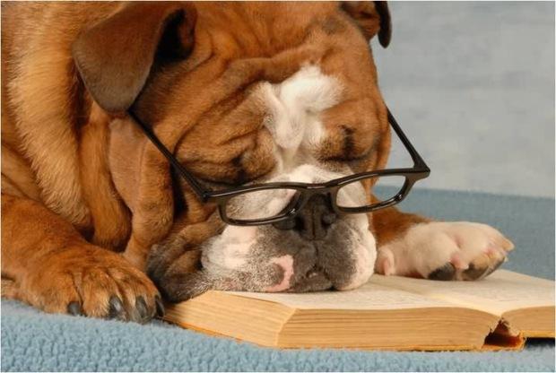 bull-dog-falls-a-sleep-on-a-book.jpg