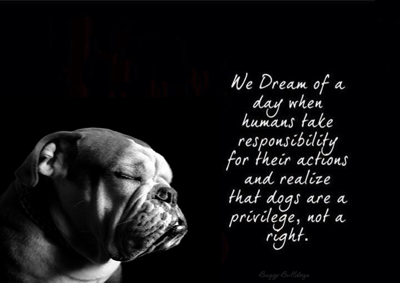 Bulldog Quotes World Animal Day  Baggybulldogs