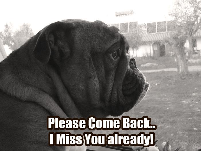 What makes the Bulldog so Special? – Baggy Bulldogs Sad Bulldog Face