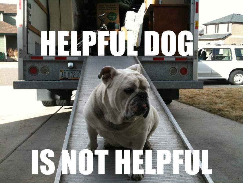 english bulldog memes what makes the bulldog so special baggybulldogs 1102