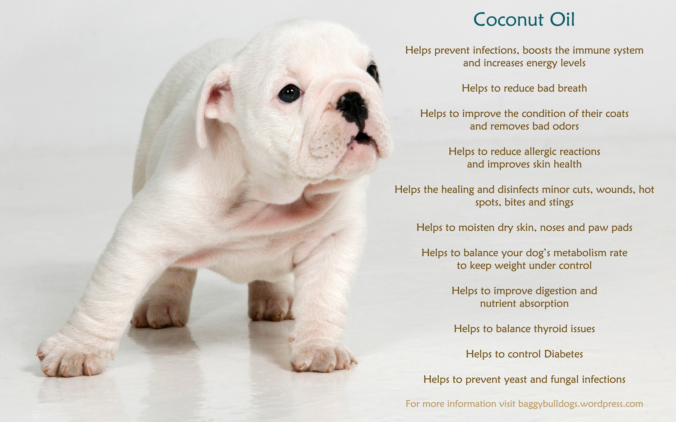 May 05,  · Benefits of Coconut Oil For Dogs So now that we know the science behind the coconut compounds, we can talk about the specific benefits. There is a ton of anecdotal evidence that points to coconut oil for dogs as an effective dietary supplement and treatment option/5(42).
