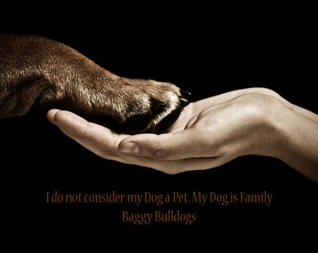 dogisfamily