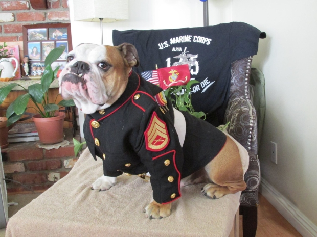 Ceasar The Marine Mascot Baggy Bulldogs