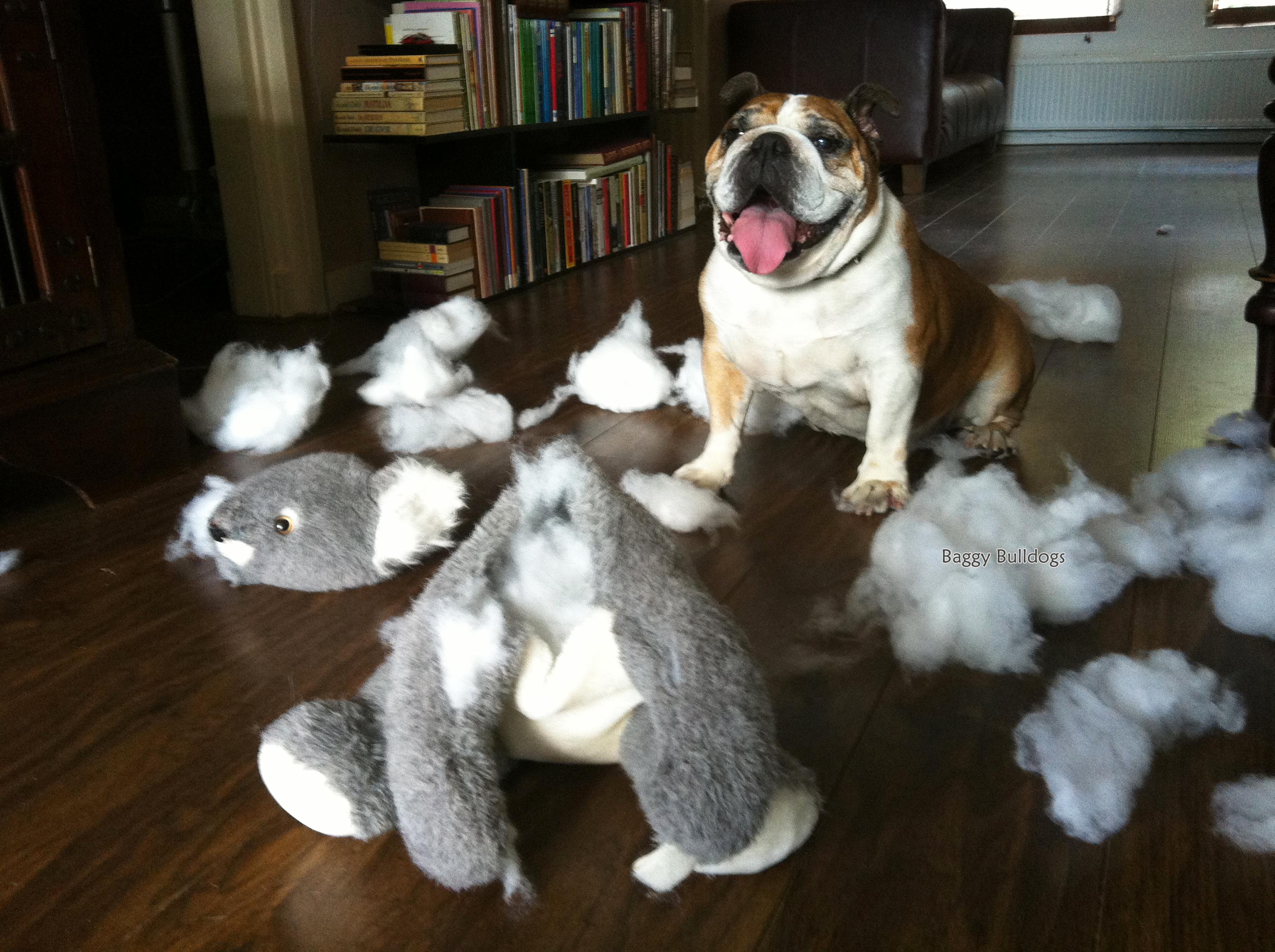 bulldog addiction checklist – baggybulldogs