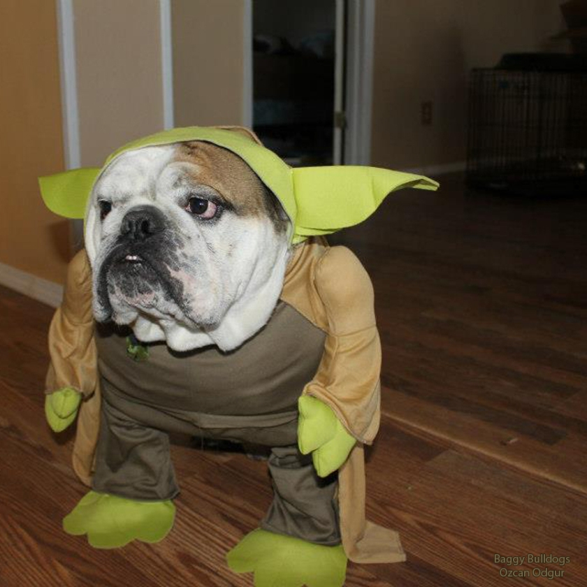 May The Fourth Be With You French: Bulldog Costumes