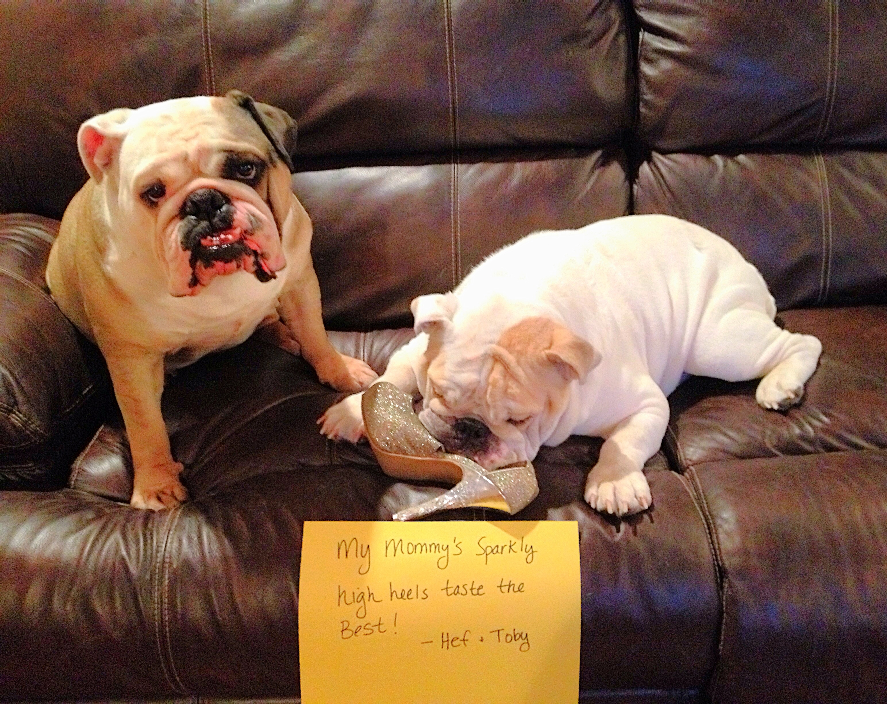 How to Stop Dogs from Destructive Chewing – BaggyBulldogs