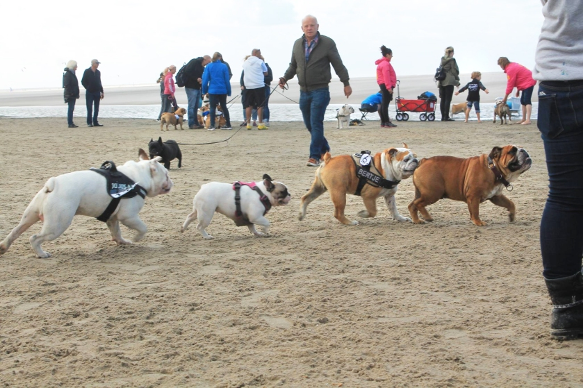 Baggy Bulldogs Beach Walk 2016