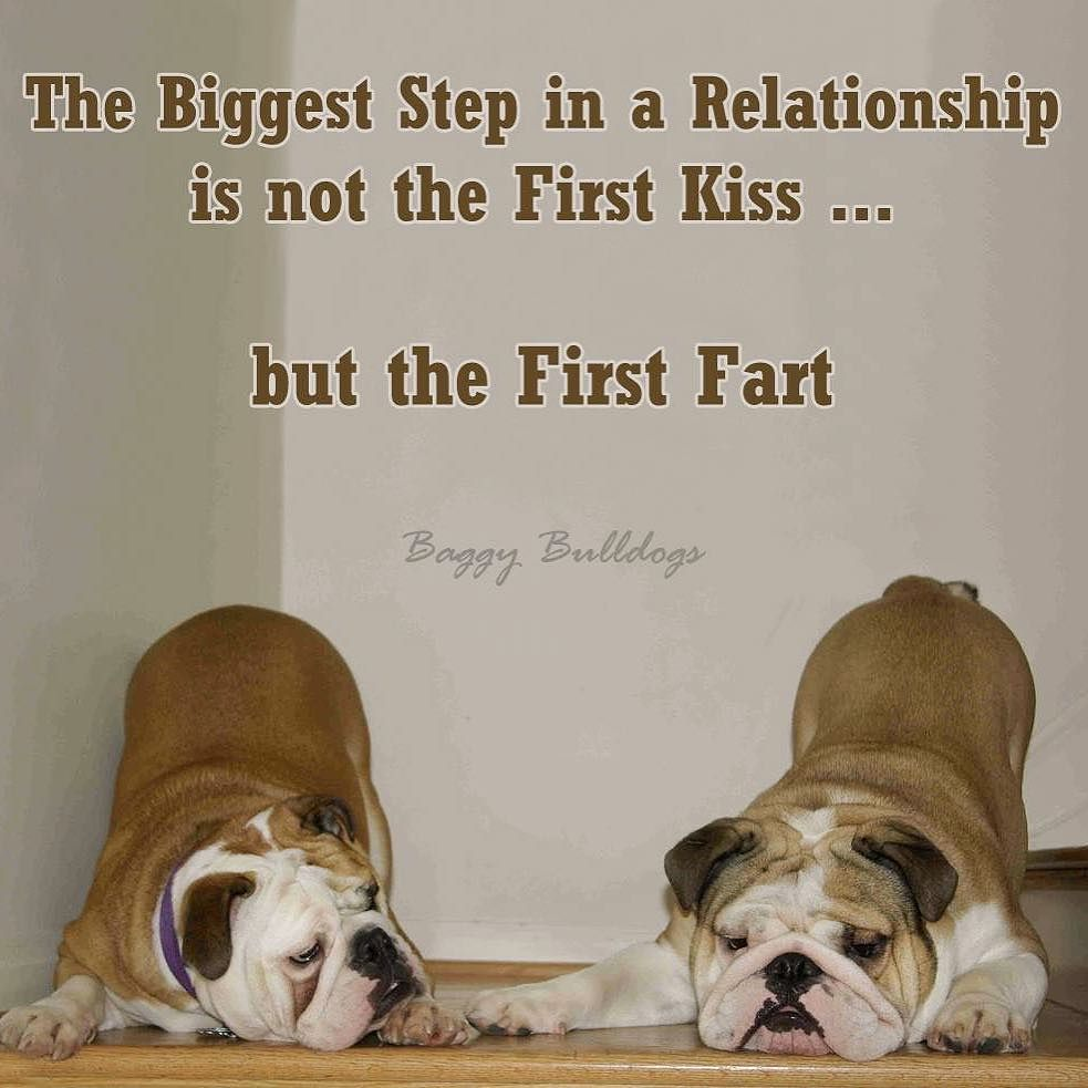 Bulldog Quotes That First Fart 😆  Baggybulldogs