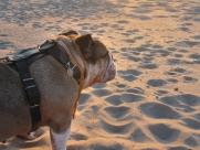 Dozer denkend op t strand